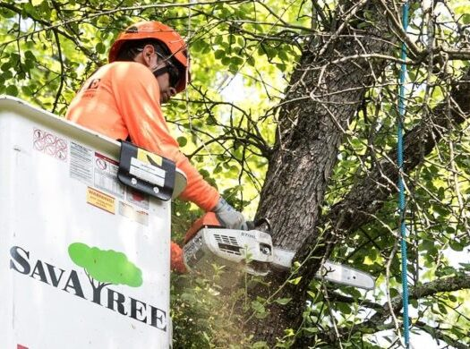 Arborist-Consultations-Henderson Tree Trimming and Stump Grinding Services-We Offer Tree Trimming Services, Tree Removal, Tree Pruning, Tree Cutting, Residential and Commercial Tree Trimming Services, Storm Damage, Emergency Tree Removal, Land Clearing, Tree Companies, Tree Care Service, Stump Grinding, and we're the Best Tree Trimming Company Near You Guaranteed!