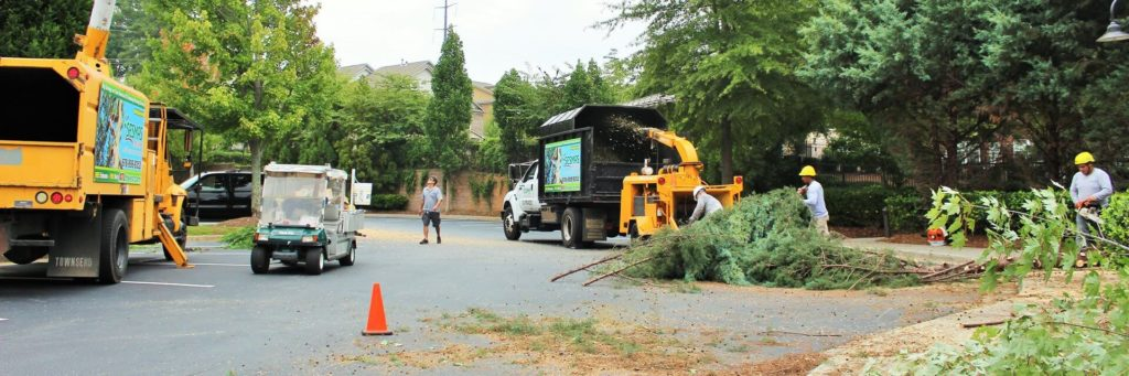Commercial-Tree-Services-Henderson Tree Trimming and Stump Grinding Services-We Offer Tree Trimming Services, Tree Removal, Tree Pruning, Tree Cutting, Residential and Commercial Tree Trimming Services, Storm Damage, Emergency Tree Removal, Land Clearing, Tree Companies, Tree Care Service, Stump Grinding, and we're the Best Tree Trimming Company Near You Guaranteed!