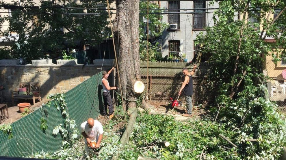 Emergency-Tree-Removal-Henderson Tree Trimming and Stump Grinding Services-We Offer Tree Trimming Services, Tree Removal, Tree Pruning, Tree Cutting, Residential and Commercial Tree Trimming Services, Storm Damage, Emergency Tree Removal, Land Clearing, Tree Companies, Tree Care Service, Stump Grinding, and we're the Best Tree Trimming Company Near You Guaranteed!