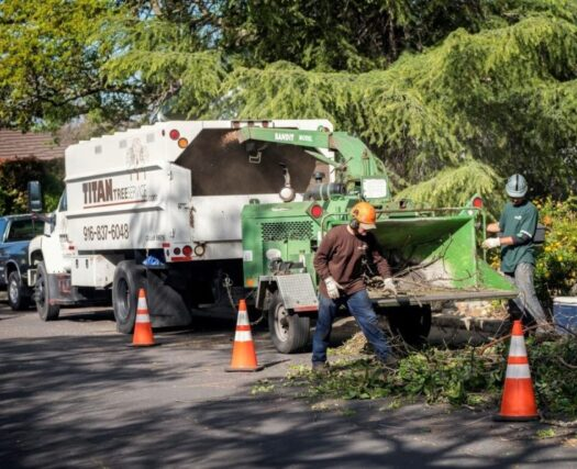 Residential-Tree-Services-Henderson Tree Trimming and Stump Grinding Services-We Offer Tree Trimming Services, Tree Removal, Tree Pruning, Tree Cutting, Residential and Commercial Tree Trimming Services, Storm Damage, Emergency Tree Removal, Land Clearing, Tree Companies, Tree Care Service, Stump Grinding, and we're the Best Tree Trimming Company Near You Guaranteed!