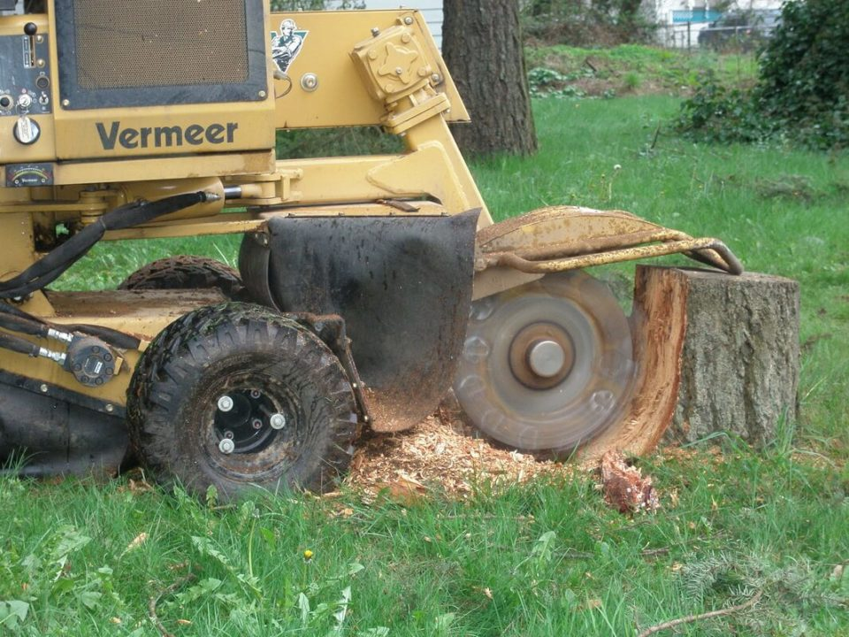 Stump-Grinding-Henderson Tree Trimming and Stump Grinding Services-We Offer Tree Trimming Services, Tree Removal, Tree Pruning, Tree Cutting, Residential and Commercial Tree Trimming Services, Storm Damage, Emergency Tree Removal, Land Clearing, Tree Companies, Tree Care Service, Stump Grinding, and we're the Best Tree Trimming Company Near You Guaranteed!