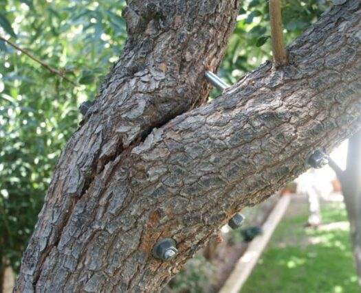 Tree Bracing and Cabling-Henderson Tree Trimming and Stump Grinding Services-We Offer Tree Trimming Services, Tree Removal, Tree Pruning, Tree Cutting, Residential and Commercial Tree Trimming Services, Storm Damage, Emergency Tree Removal, Land Clearing, Tree Companies, Tree Care Service, Stump Grinding, and we're the Best Tree Trimming Company Near You Guaranteed!