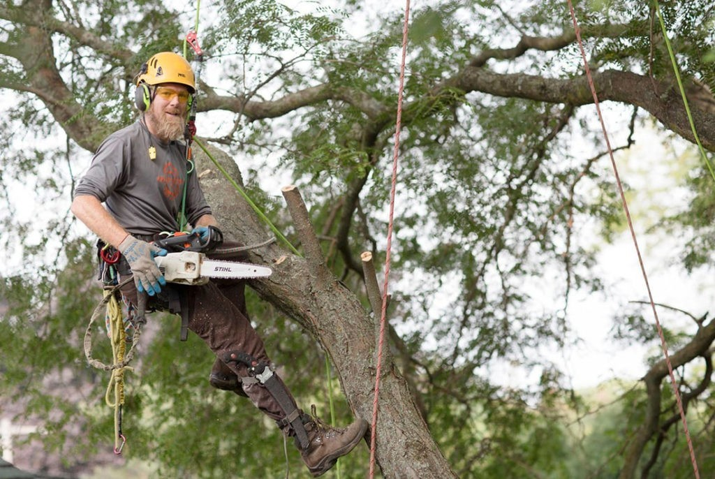 Tree-Cutting-Henderson Tree Trimming and Stump Grinding Services-We Offer Tree Trimming Services, Tree Removal, Tree Pruning, Tree Cutting, Residential and Commercial Tree Trimming Services, Storm Damage, Emergency Tree Removal, Land Clearing, Tree Companies, Tree Care Service, Stump Grinding, and we're the Best Tree Trimming Company Near You Guaranteed!