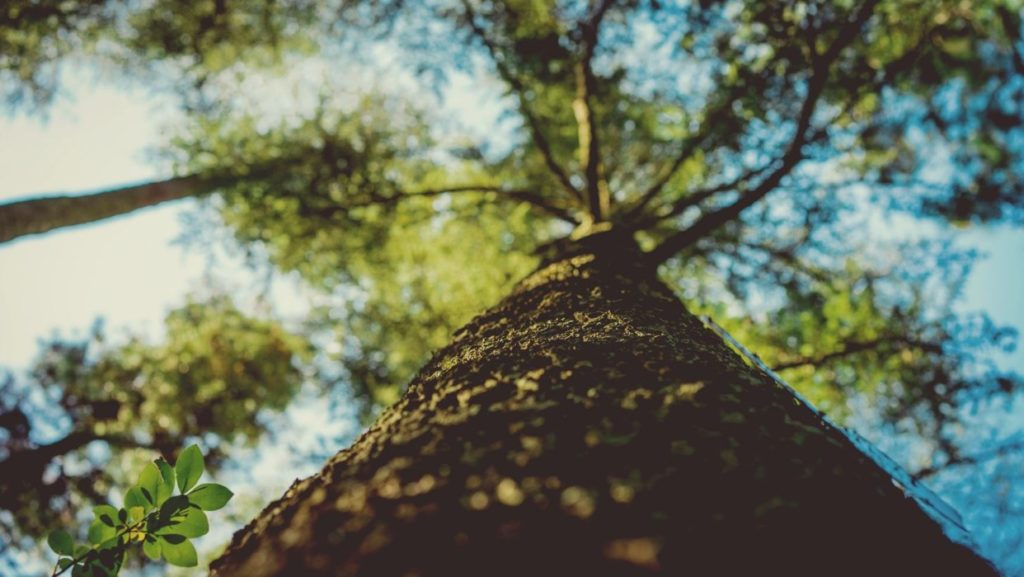 Tree-Healthcare-Henderson Tree Trimming and Stump Grinding Services-We Offer Tree Trimming Services, Tree Removal, Tree Pruning, Tree Cutting, Residential and Commercial Tree Trimming Services, Storm Damage, Emergency Tree Removal, Land Clearing, Tree Companies, Tree Care Service, Stump Grinding, and we're the Best Tree Trimming Company Near You Guaranteed!