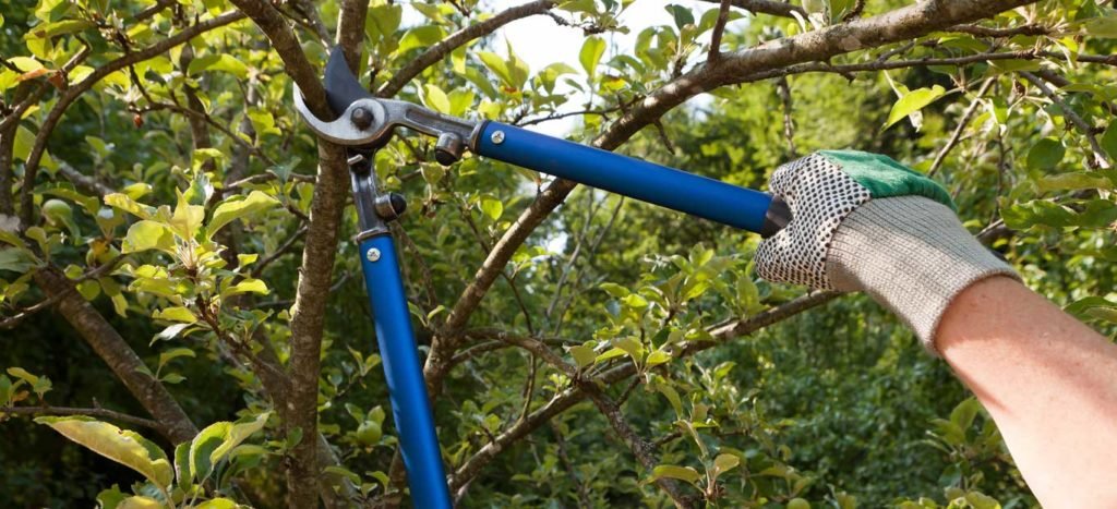 Tree-Pruning-Henderson Tree Trimming and Stump Grinding Services-We Offer Tree Trimming Services, Tree Removal, Tree Pruning, Tree Cutting, Residential and Commercial Tree Trimming Services, Storm Damage, Emergency Tree Removal, Land Clearing, Tree Companies, Tree Care Service, Stump Grinding, and we're the Best Tree Trimming Company Near You Guaranteed!