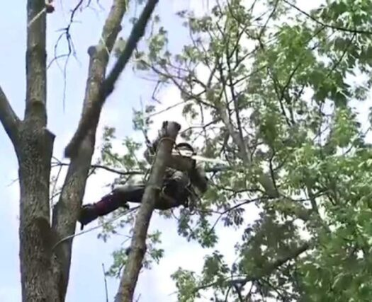 Tree-Removal-Henderson Tree Trimming and Stump Grinding Services-We Offer Tree Trimming Services, Tree Removal, Tree Pruning, Tree Cutting, Residential and Commercial Tree Trimming Services, Storm Damage, Emergency Tree Removal, Land Clearing, Tree Companies, Tree Care Service, Stump Grinding, and we're the Best Tree Trimming Company Near You Guaranteed!