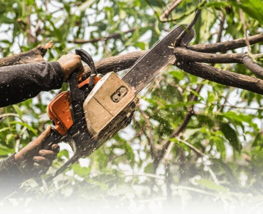 Tree-Trimming-Henderson Tree Trimming and Stump Grinding Services-We Offer Tree Trimming Services, Tree Removal, Tree Pruning, Tree Cutting, Residential and Commercial Tree Trimming Services, Storm Damage, Emergency Tree Removal, Land Clearing, Tree Companies, Tree Care Service, Stump Grinding, and we're the Best Tree Trimming Company Near You Guaranteed!