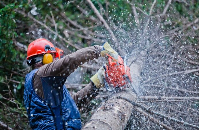 Boulder City-Henderson Tree Trimming and Stump Grinding Services-We Offer Tree Trimming Services, Tree Removal, Tree Pruning, Tree Cutting, Residential and Commercial Tree Trimming Services, Storm Damage, Emergency Tree Removal, Land Clearing, Tree Companies, Tree Care Service, Stump Grinding, and we're the Best Tree Trimming Company Near You Guaranteed!