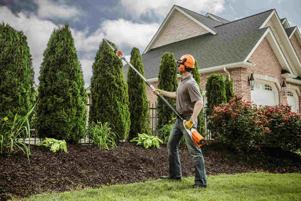 Paradise-Henderson Tree Trimming and Stump Grinding Services-We Offer Tree Trimming Services, Tree Removal, Tree Pruning, Tree Cutting, Residential and Commercial Tree Trimming Services, Storm Damage, Emergency Tree Removal, Land Clearing, Tree Companies, Tree Care Service, Stump Grinding, and we're the Best Tree Trimming Company Near You Guaranteed!