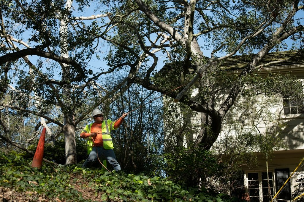 Sloan-Henderson Tree Trimming and Stump Grinding Services-We Offer Tree Trimming Services, Tree Removal, Tree Pruning, Tree Cutting, Residential and Commercial Tree Trimming Services, Storm Damage, Emergency Tree Removal, Land Clearing, Tree Companies, Tree Care Service, Stump Grinding, and we're the Best Tree Trimming Company Near You Guaranteed!
